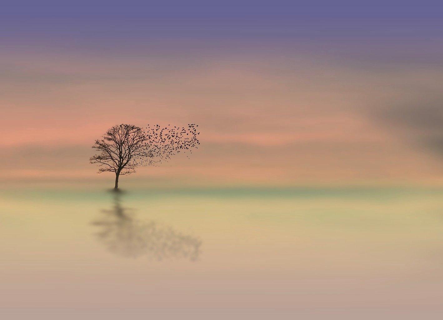 albero-nel-silenzio